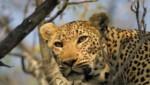 Sa-Safaris