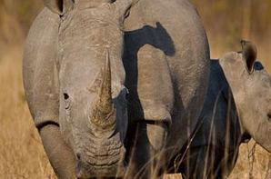 10 Day Botswana Safari Holiday Special – EURO 2 500.00 pp
