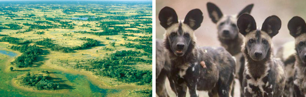 10-day-Botswana-Safari-Holiday-Special-2