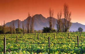 cape-winelands-accommodation-in-south-africa