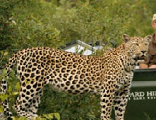 Southern Kruger Park