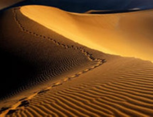 Namibia Safaris