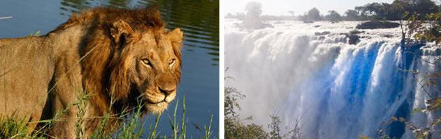 cape-diversity-tours-zambia