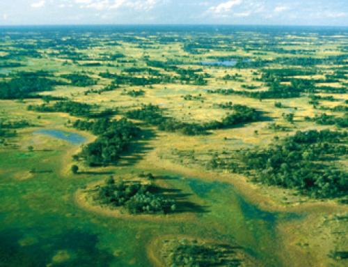 Botswana Classic Mobile Camping